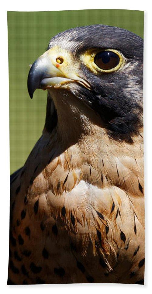 Peregrine Falcon Beach Towel featuring the photograph Peregrine Falcon by Sue Harper