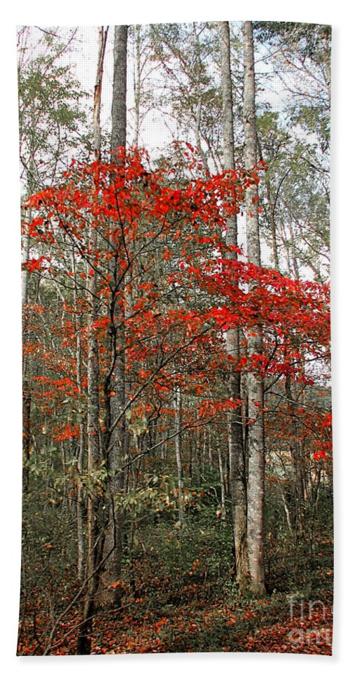 Landscape Beach Towel featuring the photograph Red Tree by Todd A Blanchard