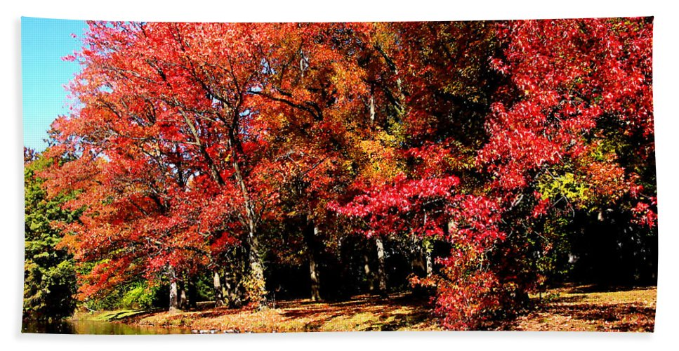 Autumn Beach Towel featuring the photograph Red Trees By Lake by Susan Savad