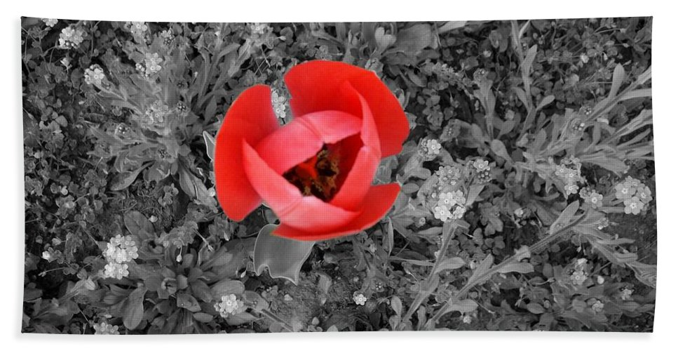 Red Tulip Photography Beach Towel featuring the photograph Red Tulip From Above by Georgeta Blanaru