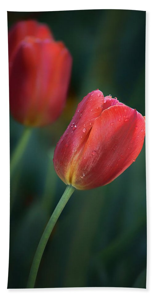 Red Tulips Beach Towel featuring the photograph Red Tulips by Nikolyn McDonald
