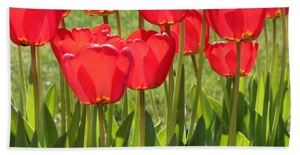 Red Tulips Beach Towel featuring the photograph Red Tulips Square by Carol Groenen