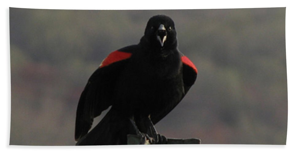 Bird Beach Towel featuring the photograph Red Winged Black Bird by Donna Brown