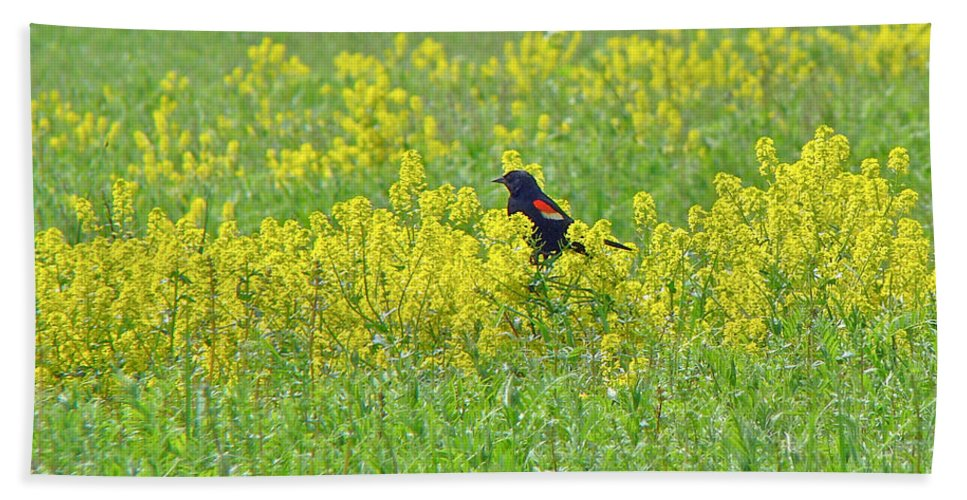 Bird Beach Towel featuring the photograph Red-winged Blackbird In Wild Mustard by Mother Nature