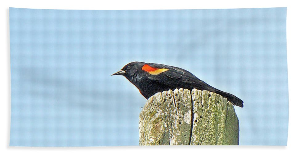 Bird Beach Towel featuring the photograph Red-winged Blackbird On Lookout Duty by Mother Nature