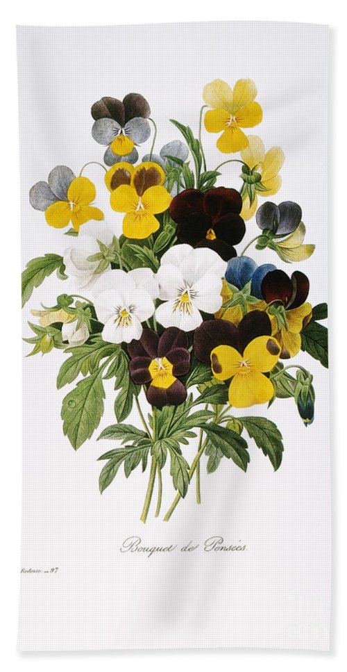 1833 Beach Towel featuring the photograph Redoute: Pansy, 1833 by Granger