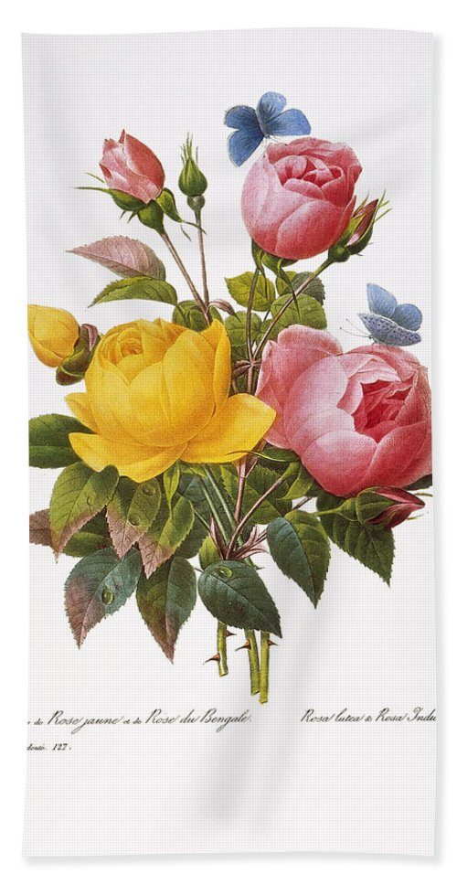 1833 Beach Towel featuring the photograph Redoute: Roses, 1833 by Granger