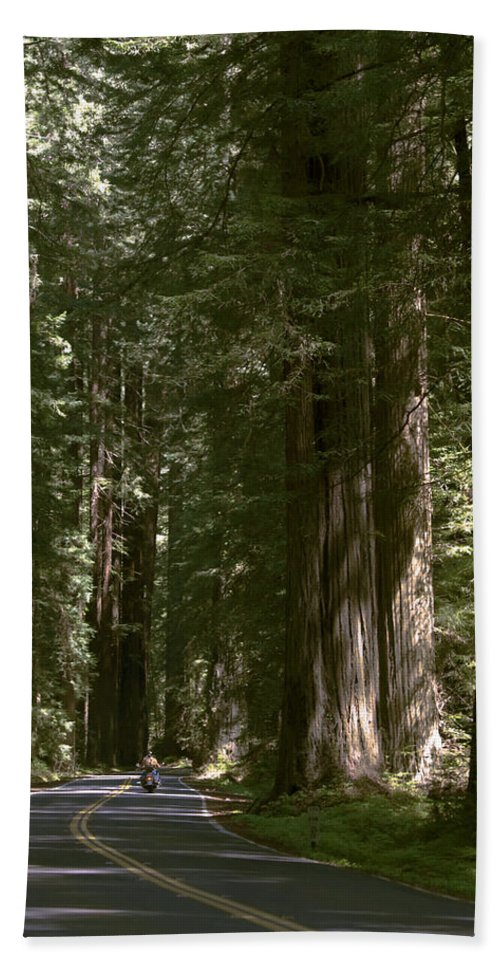 Redwood Highway Beach Towel featuring the photograph Redwood Highway by Wes and Dotty Weber