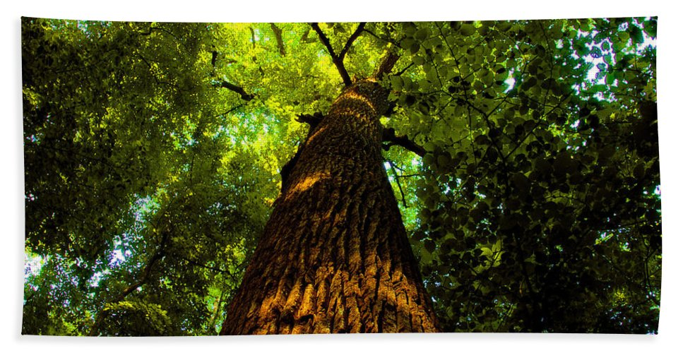 Redwood Forest Beach Towel featuring the painting Redwoods by David Lee Thompson