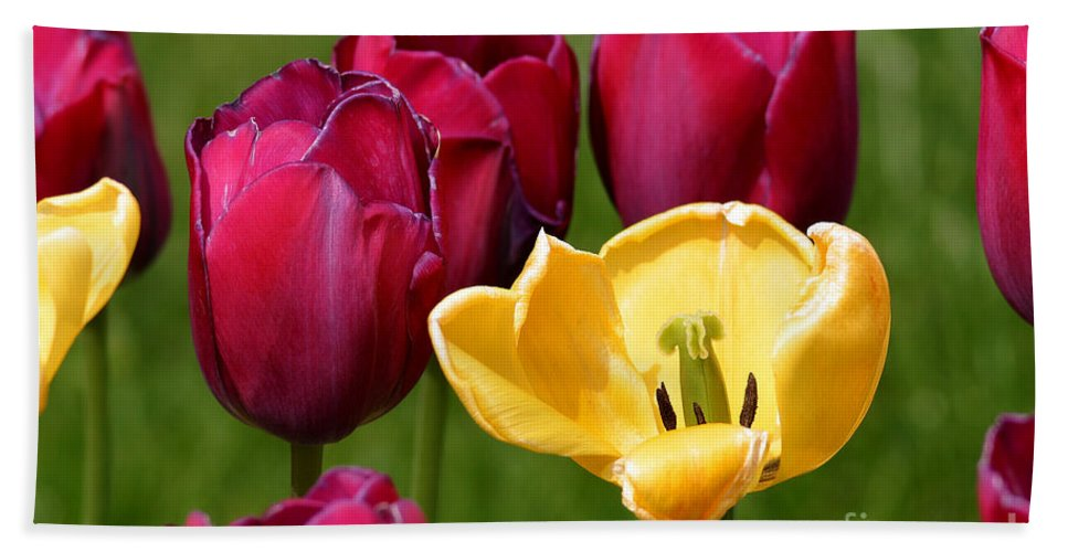 Tulip Beach Towel featuring the photograph Redyellowtulips6722 by Gary Gingrich Galleries