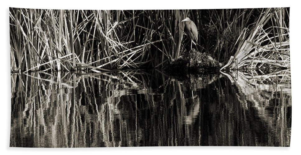 Little Blue Heron Beach Towel featuring the photograph Reeds And Heron by Steven Sparks