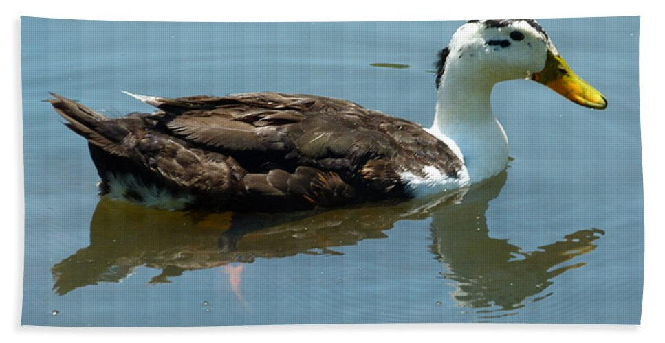 Duck Beach Towel featuring the photograph Reflecting Duck by Richard Bryce and Family
