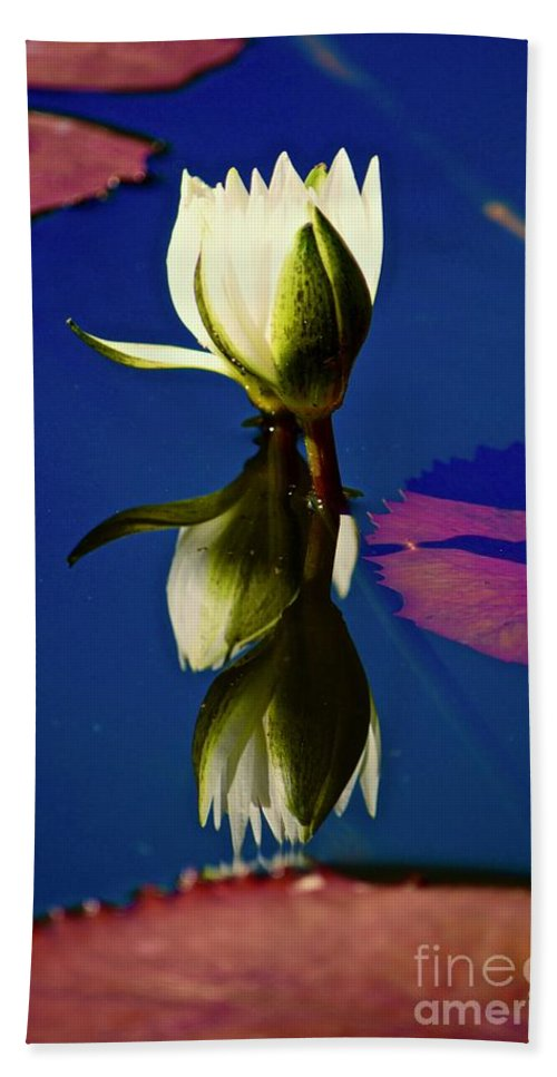 Water Lily Beach Towel featuring the photograph Reflection Of A Water Lily by Andrea Spritzer