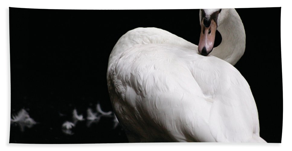 Water Beach Towel featuring the photograph Regal Plumage by Alycia Christine