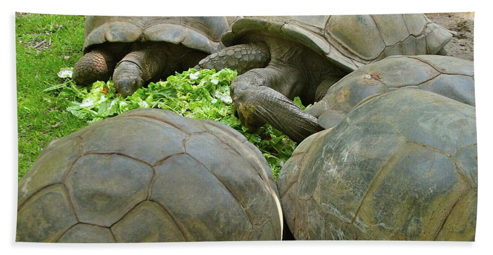 Tortoise Beach Towel featuring the photograph Reservations For Five by Rick Monyahan