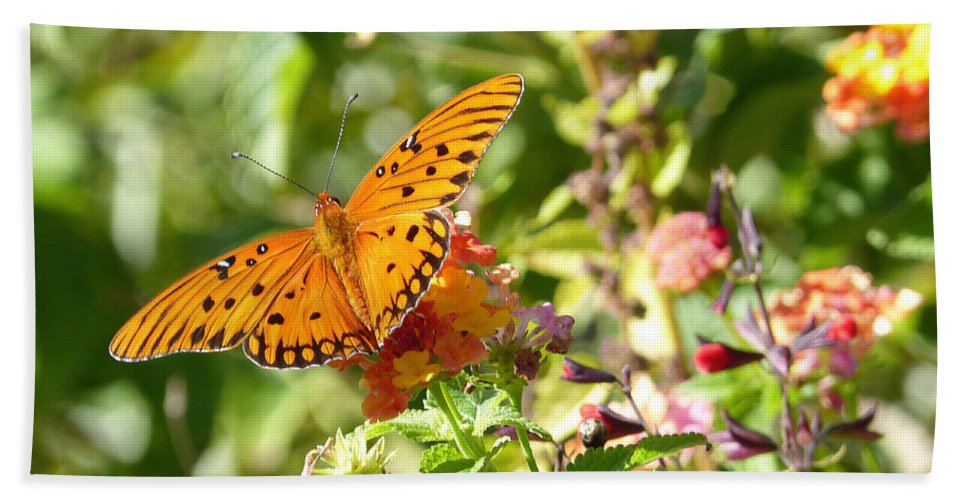 Butterfly Beach Sheet featuring the photograph Respite by Theresa Asher