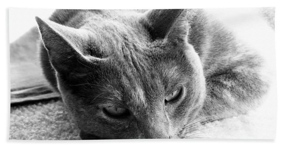 Cats Beach Sheet featuring the photograph Resting by Amanda Barcon