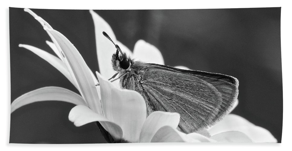 B&w Beach Towel featuring the photograph Resting by Michael Peychich