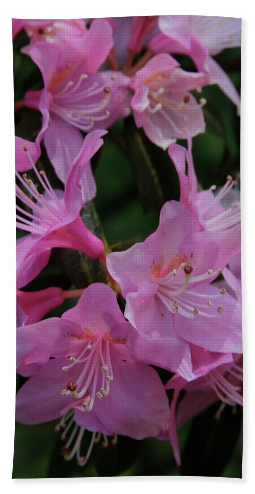 Rhododendron Beach Towel featuring the photograph Rhododendron In The Pink by Laddie Halupa