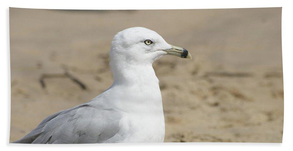 Ocean Beach Towel featuring the photograph Ring-billed Gull by Heidi Poulin
