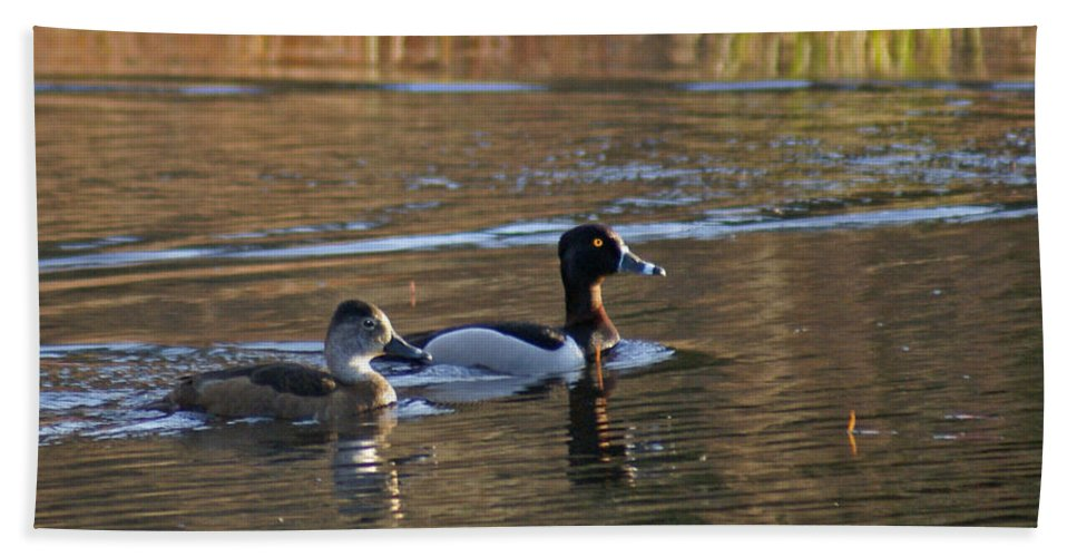 Duck Beach Towel featuring the photograph Ring Necked Duck by Heather Coen