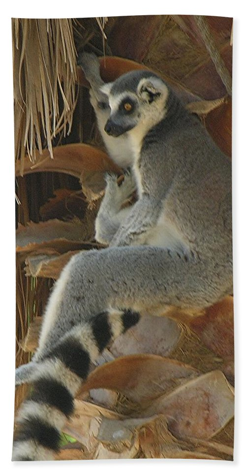Ringtail Beach Towel featuring the photograph Ring Tail by Diane Greco-Lesser
