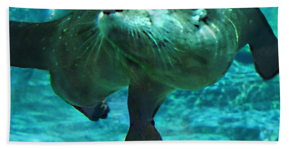 Animal Beach Towel featuring the photograph River Otter by Steve Karol