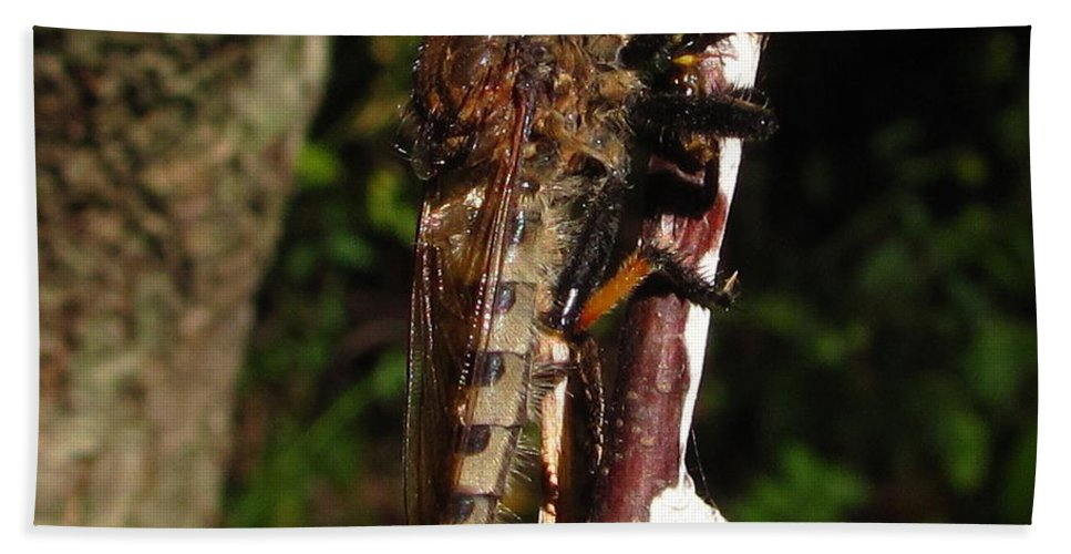 Robberfly Images Robber Fly Prints Robberfly Photos Predatory Fly Prints Forest Ecology Nature Entomology Biodiversity Oldgrowth Forest Preservation Beach Towel featuring the photograph Robber Fly by Joshua Bales