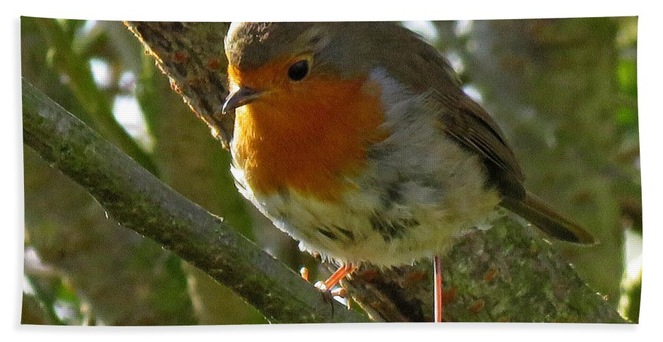 Robin Beach Towel featuring the photograph Robin In A Tree by John Topman