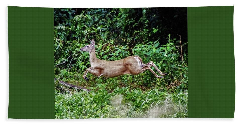 Deer Beach Towel featuring the photograph Rocking Deer by Chad Fuller