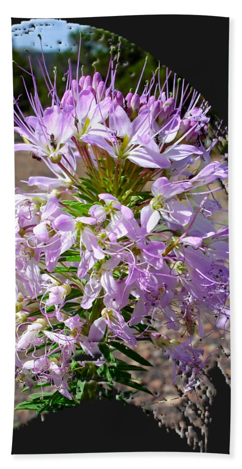 Wildflower Beach Towel featuring the photograph Rocky Mountain Bee Flower by Jim Thomas
