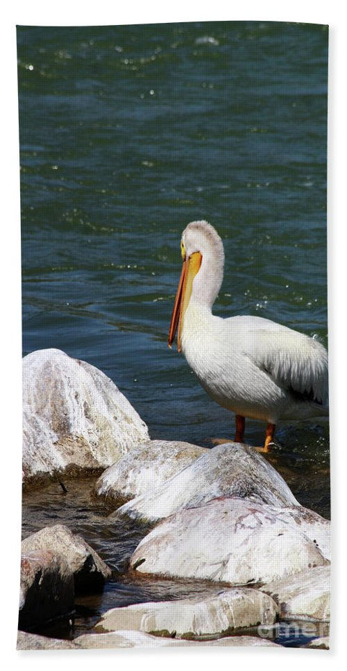 Pelican Beach Towel featuring the photograph Rocky Shores by Alyce Taylor