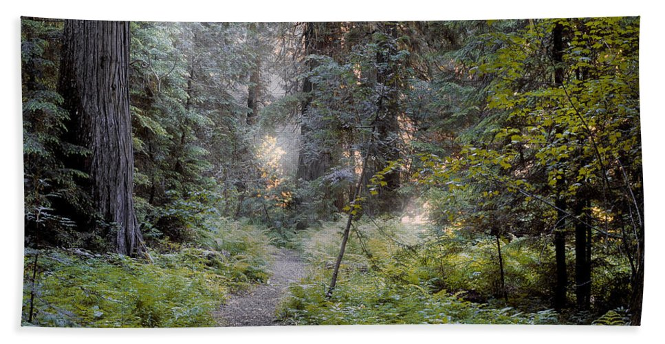Roosevelt Grove Beach Towel featuring the photograph Roosevelt Grove by Leland D Howard