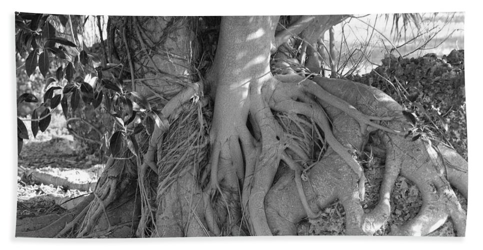 Tree Beach Towel featuring the photograph Rooted Tree by Rob Hans