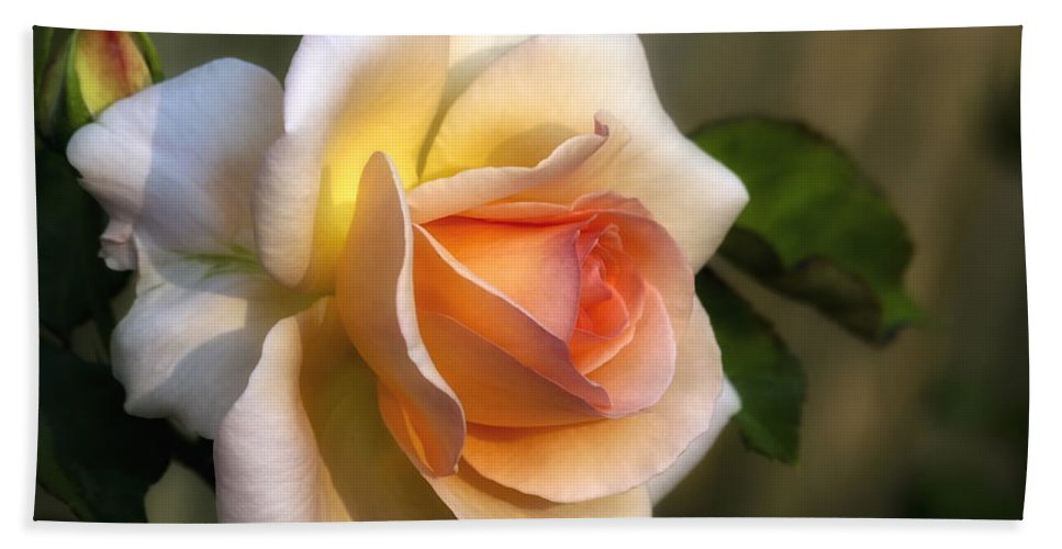Flowers Beach Towel featuring the photograph Rose by Albert Seger