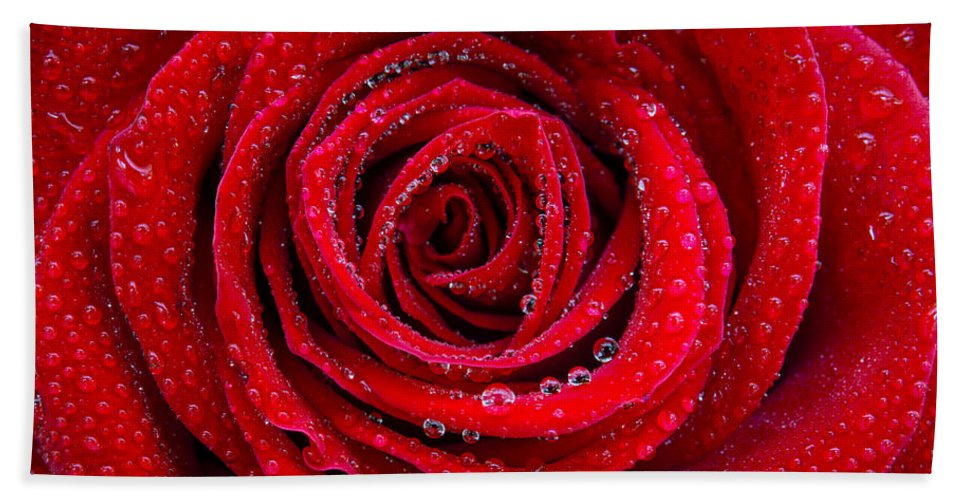 Anniversary Beach Towel featuring the photograph Rose And Drops by Carlos Caetano
