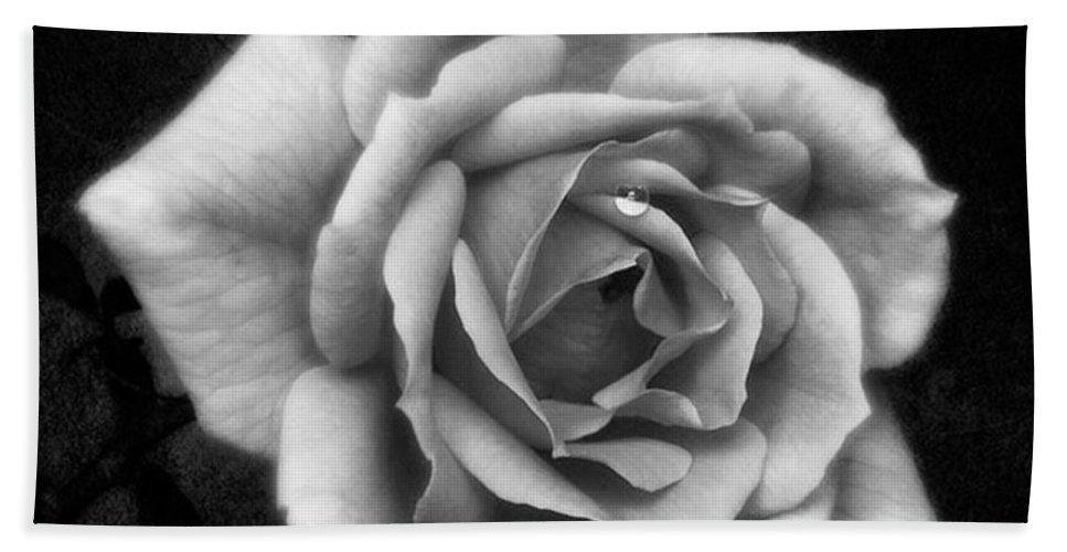 Beautiful Beach Towel featuring the photograph Rose In Mono. #flower #flowers by John Edwards
