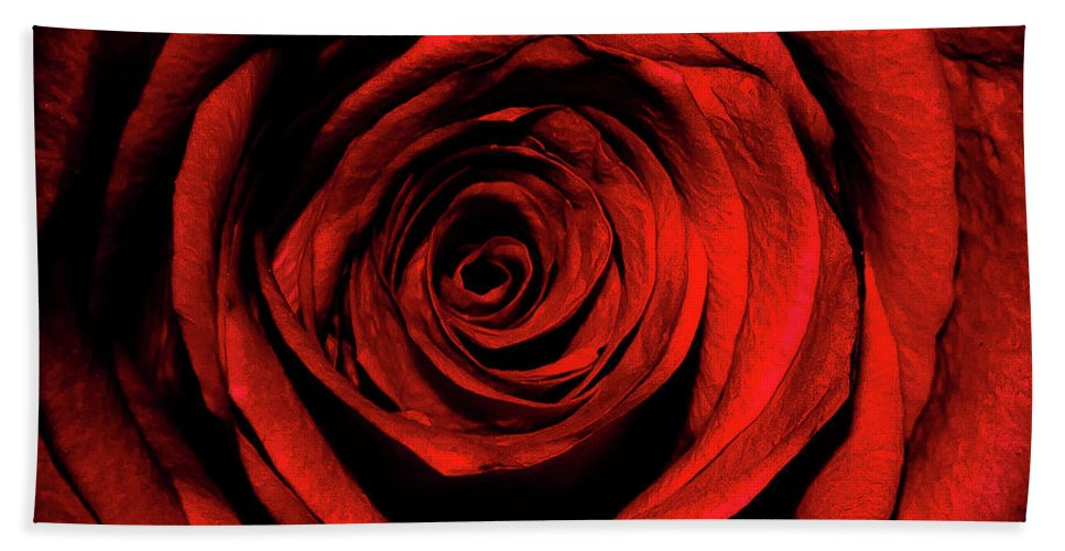 Rose Beach Towel featuring the photograph Rose by Lee Pirie