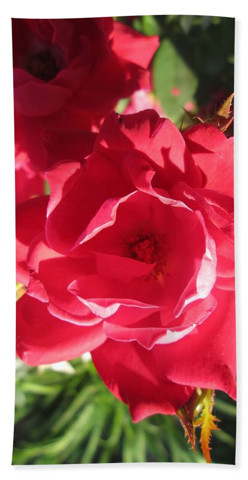 Rose Beach Towel featuring the photograph Rose Pink With Guest by Michael Potts
