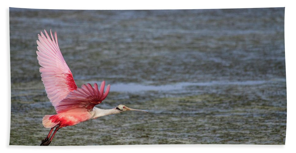 Roseate Beach Towel featuring the photograph Roseate Spoonbill by Doc Hafferty
