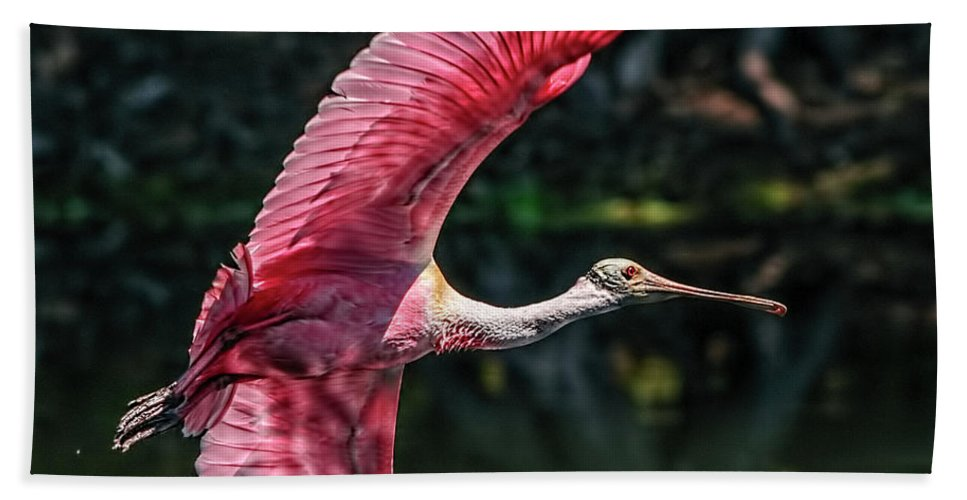Roseate Spoonbill Beach Towel featuring the photograph Roseate Spoonbill by Steven Sparks