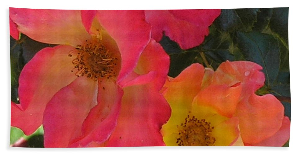 Rose Beach Sheet featuring the photograph Roses by Dean Triolo