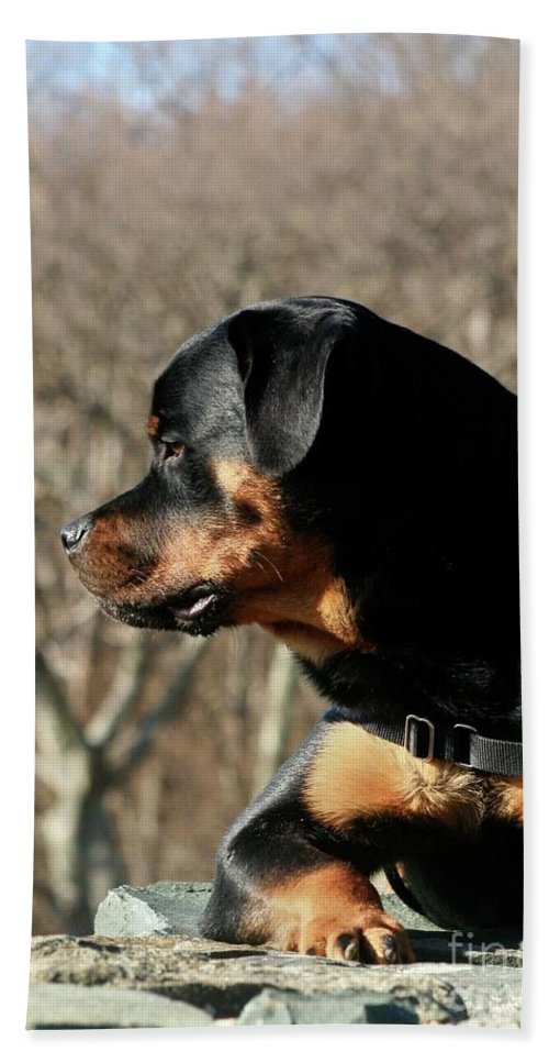 Rottweiler Beach Towel featuring the photograph Rottie Profile by Gregory E Dean