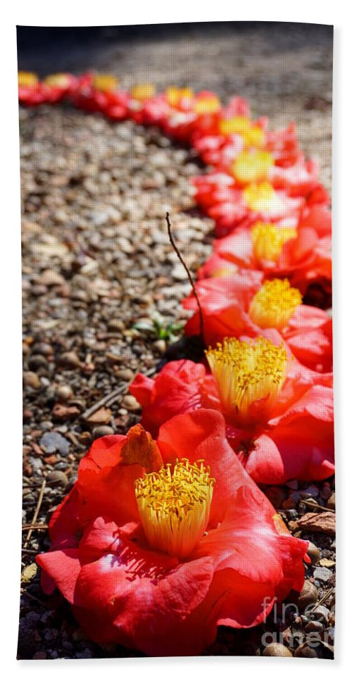 Macro Beach Towel featuring the photograph Row Of Flowers by Kathryn Jinae