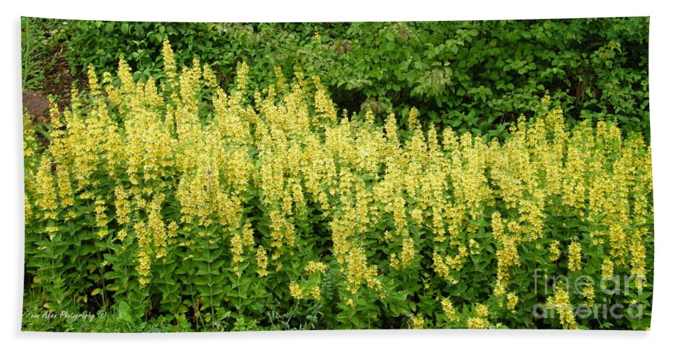 Flowers Beach Towel featuring the photograph Row Of Yellow Flowers by Mikhael van Aken
