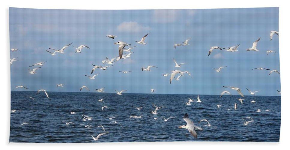 Royal Tern Beach Towel featuring the photograph Royal Blue Ocean Tern by Barbara Chichester