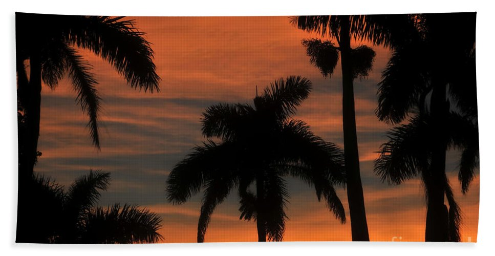Royal Palm Trees Beach Towel featuring the photograph Royal Palms by David Lee Thompson