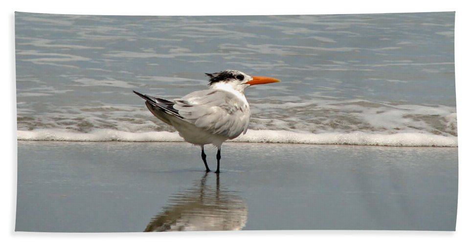 Nature Beach Towel featuring the photograph Royal Tern Reflection by Peg Urban