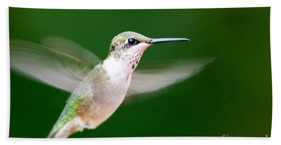 Bird Beach Towel featuring the photograph Ruby Throated Hummingbird by John Harmon