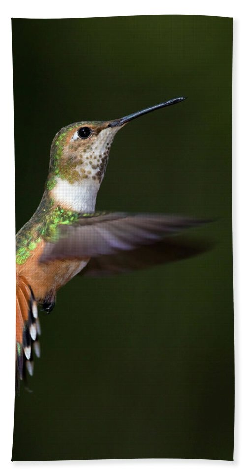 Rufous Beach Towel featuring the photograph Rufous Hummingbird In Flight by Randall Ingalls